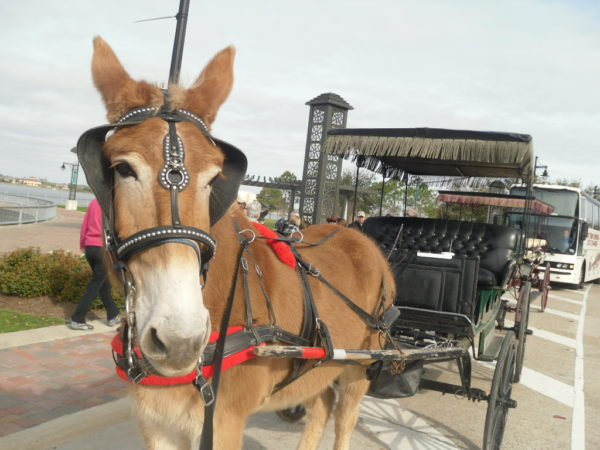 Carriage ride through Margaret Place Historic District
