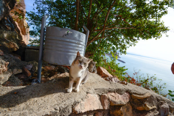 El gato at El Faro: one of several critters that greet hikers traveling up the path to the lighthouse