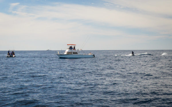 The best time for Whale Watching in Cabo San Lucas, is from mid January to mid-March