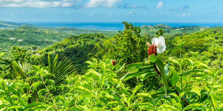The view from the Flower Forest in Barbados
