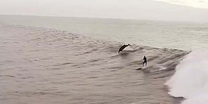Man surfs with dolphins